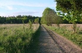 Droga do Rezerwatu Ścisłego obecnie